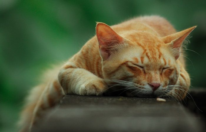 Рыжий кот. Фото: ch3tak:Pexels/pixabay.com /License | Epoch Times Россия