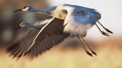 Лучшие места миграции дикой природы