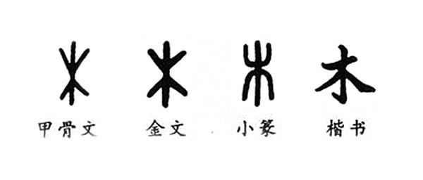 Различные образы иероглифа «木» вистории. Фото: magnifissance.com