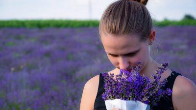 Семь целебных свойств эфирного масла лаванды