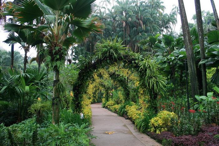Огромный ботанический сад построят в Саудовской Аравии