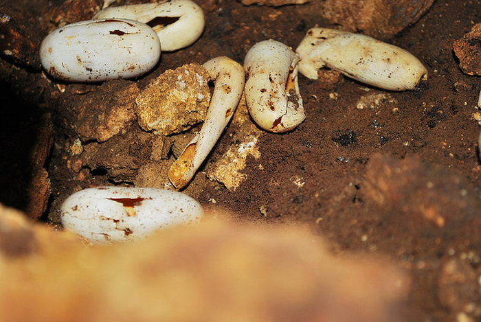 В московском зоопарке у редких змей появилось потомство
