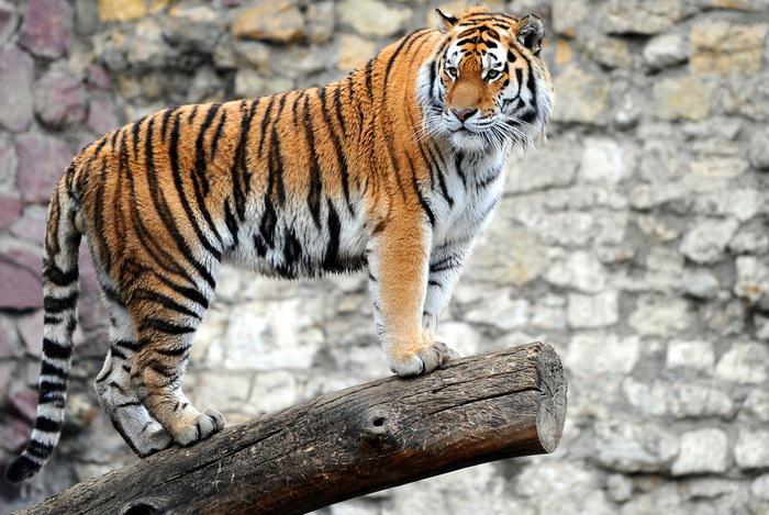 Московский зоопарк ищет помощников