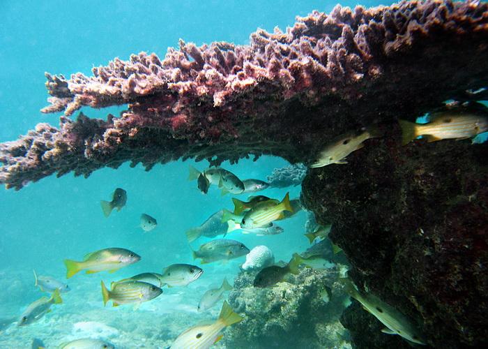 В мутных водах Персидского залива обнаружен коралловый риф