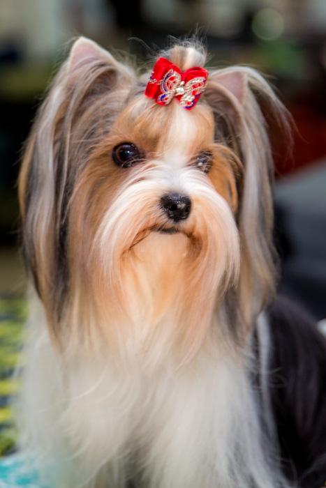 Интересные фотографии с выставки собак