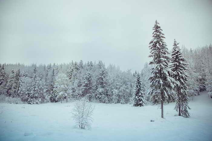 В Московской области  создадут национальный парк «Московия»