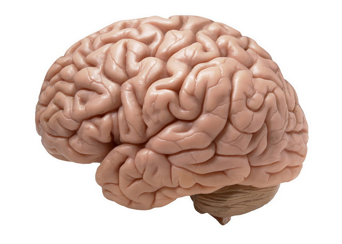 фото мозг человека