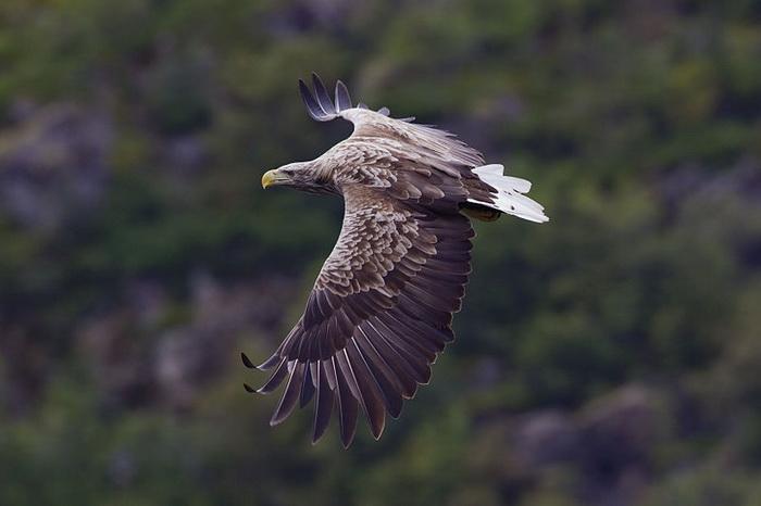 Орнитологи Бурятии следят за редкими птицами при помощи MMS