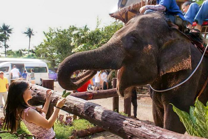 Таиланд приглашает на Национальный день слона