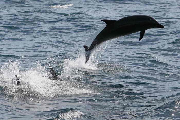 Более 130 дельфинов выбросились на побережье Японии