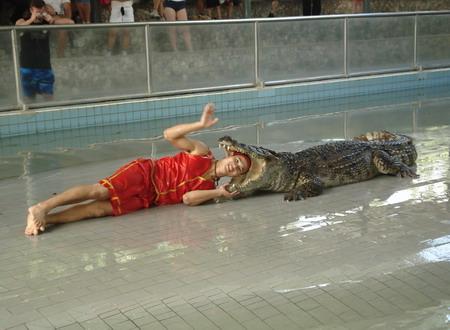 Представление на крокодиловой ферме в Паттайе. Повторить такое вам не разрешат, а вот посидеть на крокодиле – запросто. Фото: Александр Карпов
