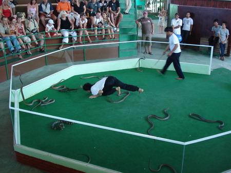 Представление на змеиной ферме, после которого все желающие могут попробовать блюда из кобры: стейк, суп …. Здесь же можно было приобрести средства народной  медицины, изготовленные из змей. Фото: Алексей Карпов