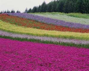 Цвета испускают вибрации. Фото: Photos.com