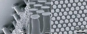 Поверхность созданного учеными материала с разных ракурсов (вещество: поливинилсилоксан). Фото: Gorb et al.
