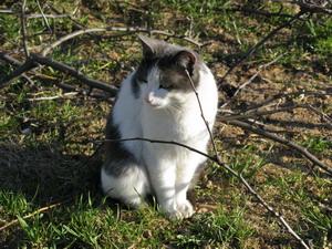 Следует ли стричь когти кошке? Фото: Наталья Карпенко/Великая Эпоха