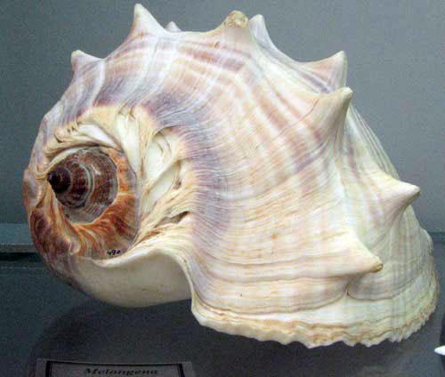 Уникальная коллекция морских раковин. Фото: Юлия Ламаалем /Великая Эпоха