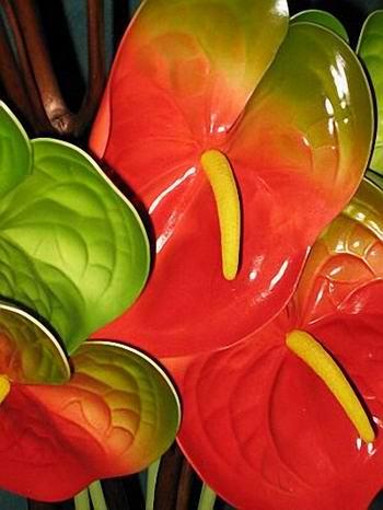 Антуриум или цветок «фламинго». Фото предоставлено флористом (Maple-КЛЕН), Сидней