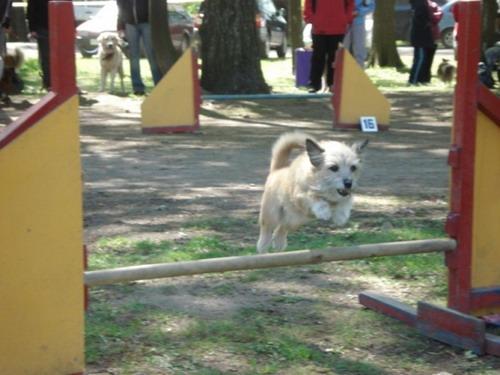 Я маленький, но прыгаю  как  лошадь. Фото: МО