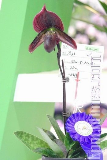 Выставка орхидей в Тайване. Фото: Великая Эпоха