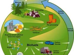 Одна из схем получения и использования биотоплива. Иллюстрация с сайта mixph.com