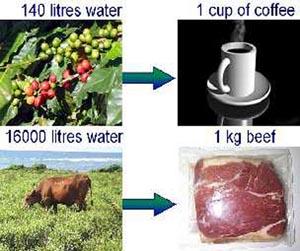 Для производства одной чашки кофе нужно 140 литров воды, одного килограмма говядины – 16 тысяч литров воды. Изображение с сайта ihp.bafg.de