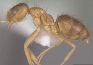 Объекты NASA под угрозой «бешеных муравьев», пожирающих компьютеры. Фото с сайта moe-online.ru