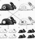 Графический пример телегонии. Иллюстрация с блога sergey-lapshin.livejournal.com