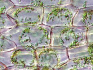 Ученые смогли остановить процессы старения в клетках и органах. Фото с сайта cybersecurity.ru