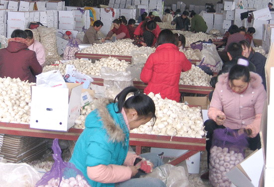 Жители «чесночной деревни» провинции Шаньдун упаковывают чеснок. Фото: Великая Эпоха
