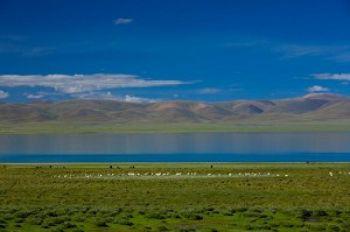 Бескрайние горы, озера, коровы и овцы в Тибете. Фото: Getty Images