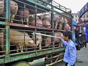 Транспорт со свиньями перед бойней в округе Тяньхэ в Гуанчжоу южная провинция Гуандун.(AP Photo/Color China Photo)