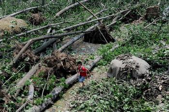 Разбушевавшаяся стихия повалила множество деревьев. 15 июня. Посёлок Фэнмяо провинции Аньхой. Фото с epochtimes.com