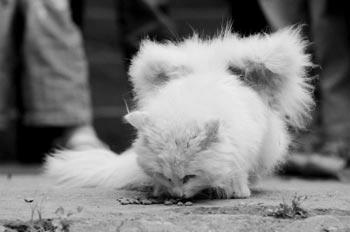 У кошки начали расти крылья. Фото с epochtimes.com