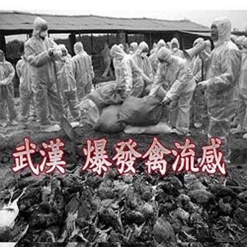 В городе Ухань произошла вспышка птичьего гриппа. Фото: Sound Of Hope