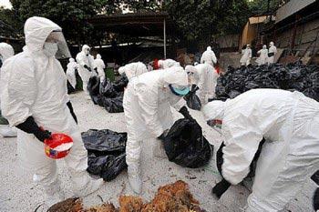 Работники специальной бригады проводят дезинфекцию места заражения птичьим гриппом.   Фото: пресс-центр властей Гонконга