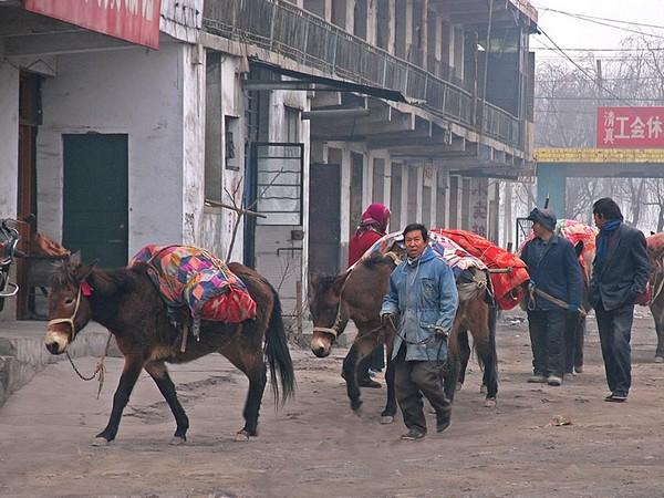 На навьюченных ослах привезли на рынок товар. Провинция Ганьсу. Фото: Zhenda
