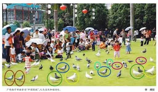 Фотография из газеты «Жэньминь Жибао». Сдублированные голуби выделены кружками разных цветов