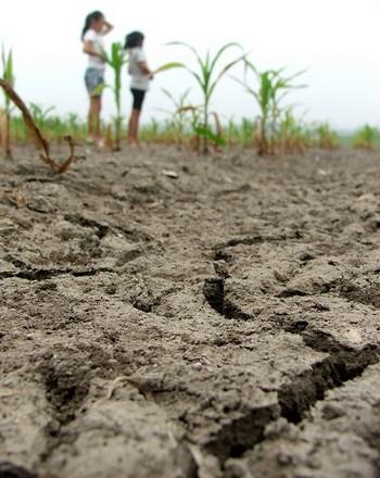 От засухи в Китае этом году особенно сильно пострадала провинция Ляонин. 17 августа 2009 год. Фото с epochtimes.com