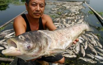 Около 120 тонн рыбы погибло в реке Чжегао в результате загрязнения воды. Провинция Аньхой. 25 июля 2009 год. Фото с epochtimes.com