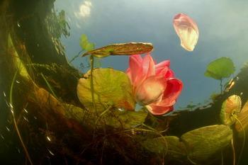 Фотографии Светланы Носовой, сделанные под водой.