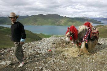 Тибетский пастух со своим яком идет по тропе Камбаса, находящейся на высоте 4794 метров над уровнем моря, по старой дороге из Лхаса до Гъянцзы, возвышающейся над озером Ямдрок-Цзо. Фото: Frederic J. Brown /AFP /Getty Images