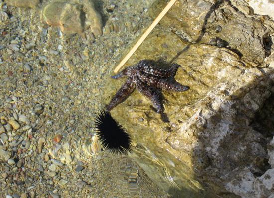 Морская звезда в прозрачной воде. Фото: Ирина Рудская/Великая Эпоха