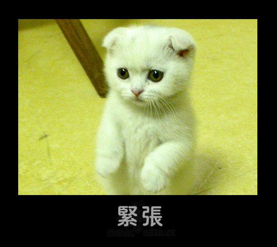 Напряженность. Фото с secretchina.com