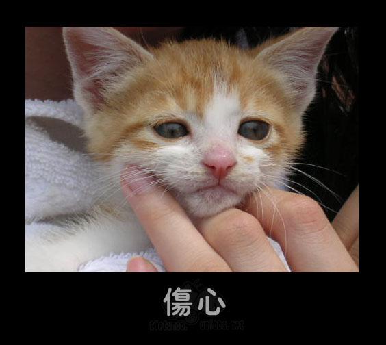 Печаль. Фото с secretchina.com