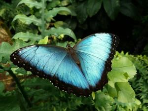 Чтобы ощутить восхищение красотой этой бабочки, необходимо много секунд, но это чувство приятнее и сохраняется дольше, чем когда быстро переходишь к следующей картинке. Фото: Tim Reinhart /pixelio.de