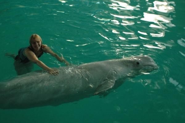Дельфинам грозит опасность. Фото блоггера lisstm с liveinternet.ru/users/lisstm/post98369141