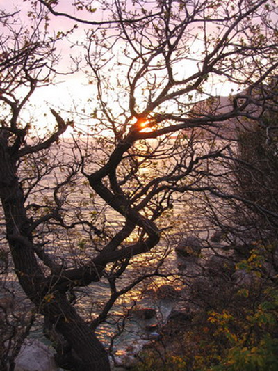 Море. Закат сквозь ветви дерева Ирина Рудская/ The Epoch Times