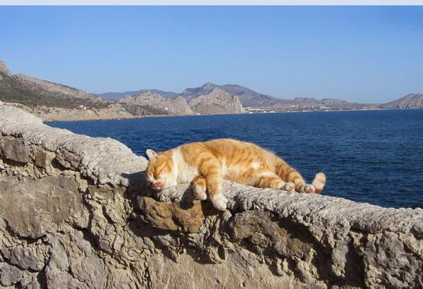 Морской кот Ирина Рудская/ The Epoch Times