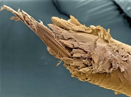 Секущиеся кончики волос (регулярный уход за волосами поможет избежать этого). Фото с aboluowang.сom