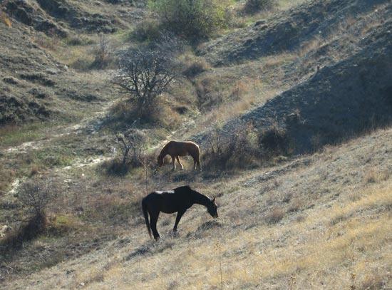 Крым. Горы. Две лошади. Фото: Ирина Рудская/Великая Эпоха (The Epoch Times)